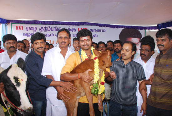 108 Calf's Donated by Vijay to Poor's