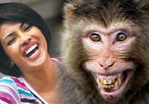 Priyanka Chopra Birthday: When Priyanka was SLAPPED by a Monkey  FilmiBeat