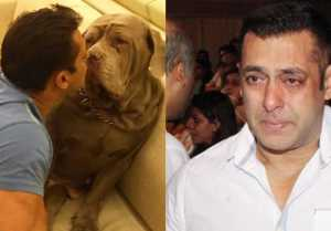 Salman Khan's most beautiful dog My Love passes away