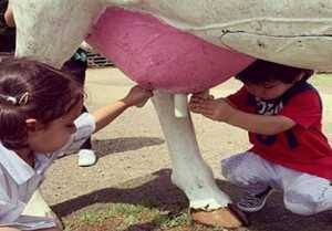 Taimur Ali Khan plays with Cow in dairy farm; Check out