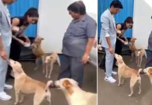 Shraddha Kapoor shows love for street dogs; Watch video