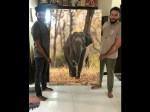 Darshan Sells His Wildlife Picture To A Kannada Actor Chikanna For Whopping Price Of 1 Lakh Rupees