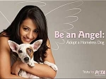 Trisha Krishnan Urges Adopt Dog Peta 030611 Aid