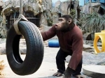 Rise Of The Planet Of Apes Rule Box Office