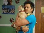 Riteish Deshmukh Bond With Pug Fakhruddin Kskhh