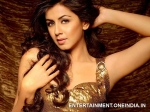 Nikki Galrani Busy Bee In Sandalwood Oberoi