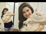 Happy Birthday Prachi Desai 5 Times The Actress Got Catty On Instagram