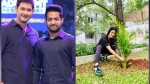 Shruti Haasan Takes Up Mahesh Babu's Green India Challenge; Social Media Awaits Jr NTR's Pictures!