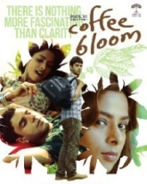 Coffee Bloom