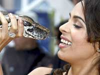 Mallika Sherawat Kiss with Snake