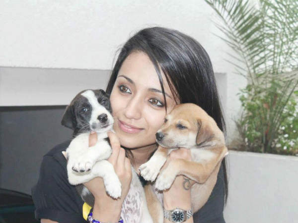 Trisha Krishnan's Pet Dog