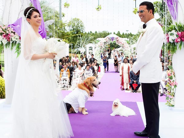 Dog's Marriage