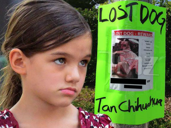 Holmes Offers $1,000 Reward After Suri's Pet, Chihuahua Goes Missing