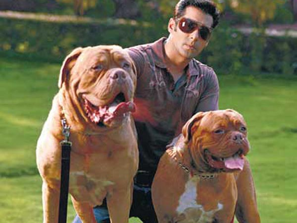 Salman Clicked With His Dogs