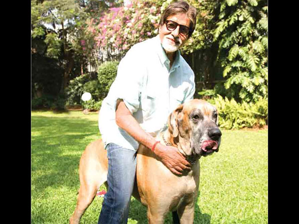 Big B On Having His Platter Full With Films
