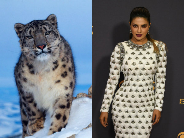 Well Dressed Or Snow Leopard? Twitter Confused Over Priyanka Chopra's Emmys Outfit!