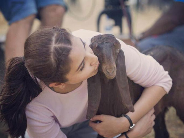 Helping Animals Is Our Responsibility, Says Anushka