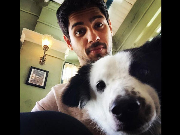 sidharth-malhotra-urges-pm-stronger-penalties-against-those-who-abuse-animals