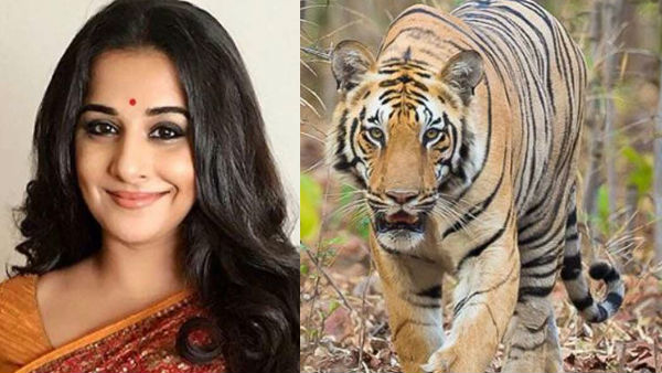 Vidya Balan To Star In Film On Man-Eater Tigress Avni?