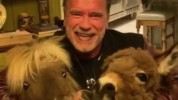 Coronavirus: Arnold Schwarzenegger Advocates Self Isolation, 'You're Not Allowed Outside Your House'