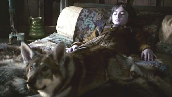 Bran Stark's Direwolf In 'Game of Thrones' Dies Of Cancer At Age 10