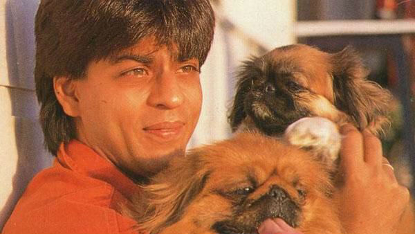 Shah Rukh Khan Urges Everyone To Be Compassionate Towards Animals During The Lockdown!