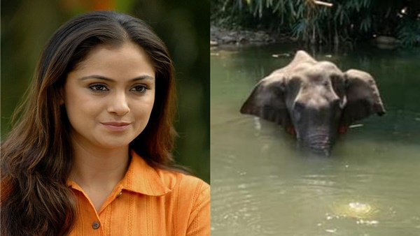 ALSO READ: Pregnant Elephant Death: Actress Simran Is Heartbroken With This Inhuman Incident
