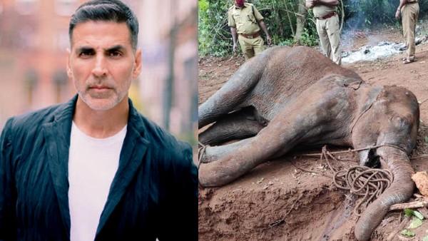 Kerala Pregnant Elephant Death: Akshay Kumar Says Strict Action Should Be Taken Against The Culprits