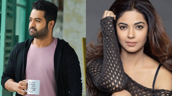 Jr NTR Fans Call Meera Chopra A B*tch On Social Media!