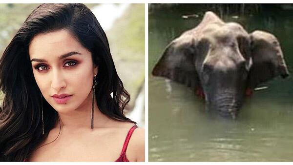 Shraddha Kapoor And Athiya Shetty Express Fury Over Killing Of Pregnant Elephant With Firecrackers