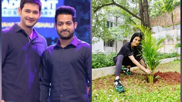 Shruti Haasan Takes Up Mahesh Babu's Green India Challenge; Social Media Awaits Jr NTR's Pictures!