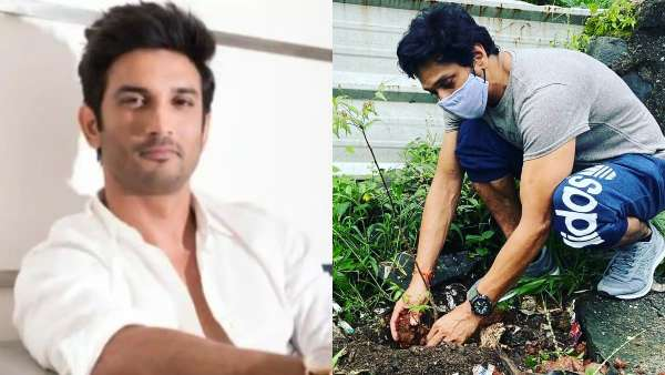 Mukesh Chhabra, Mahesh Shetty Plant Saplings To Fulfil One Of Sushant Singh Rajputs 50 Dreams