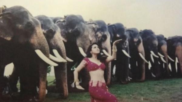Preity Zinta Wonders What The Elephants Were Thinking When She Danced On Jiya Jale Song