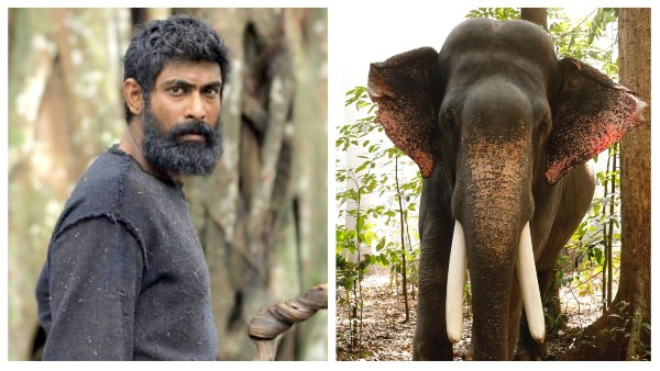 Also Read: Here's Unni The Elephant, The Biggest Star From Haathi Mere Saathi