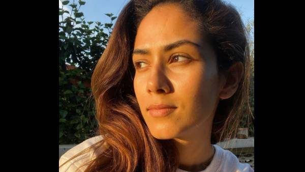 ALSO READ: Shahid Kapoor's Wife Mira Rajput Shares Heartfelt Post, Talks About Finding A Ray Of Hope
