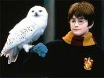 https://www.filmibeat.com/img/2011/01/07-harry-potter-owl-231110.jpg
