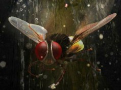 Sudeep's Naan Ee (Eega) rewrites history at Tamil Box Office