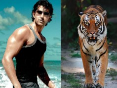 OMG! Hrithik Roshan To Fight With Tigers In Mohenjo Daro