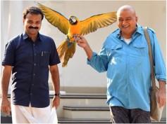 Panchavarna Thatha Box Office: Jayaram & Kunchacko Boban Starrer Are Set For A Long Run!