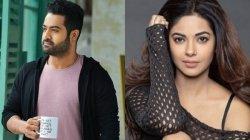 Jr Ntr Fans Abuse Meera Chopra On Social Media For This Reason