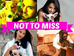 Tollywood Celebrities and Their Love For Dogs