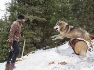 WATCH OUT! Salman Khan Battles Dangerous Wild Wolves