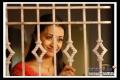 Trisha Krishnan