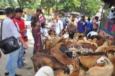Bakrid Festival in Andhra Pradesh