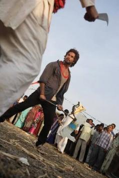 Shahid Kapoor still from film R... Rajkumar