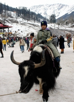 Tourists enjoy a Yak ride in fresh Snowfall at Solang Nala in Manali