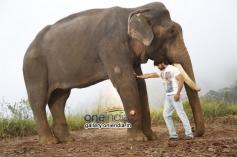 Yash in Kannada Movie Gajakesari