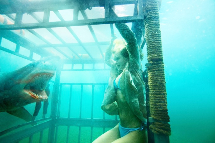 Shark Night 3D Photos