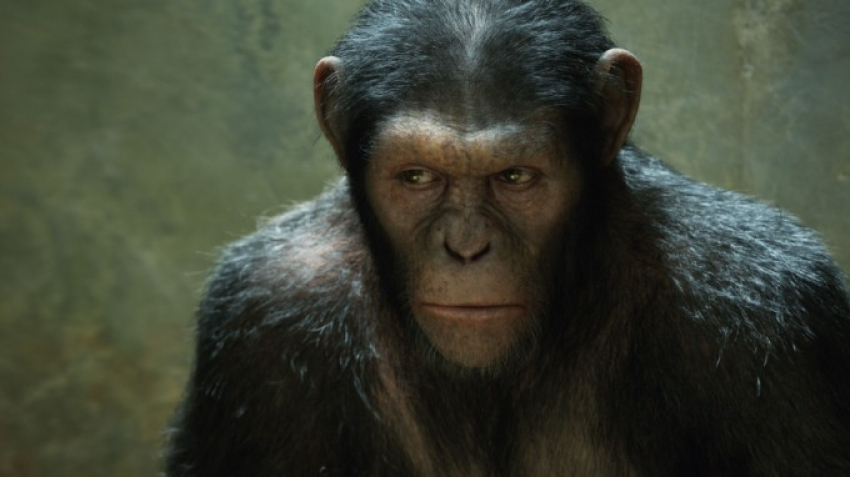 Rise Of The Planet Of The Apes Photos
