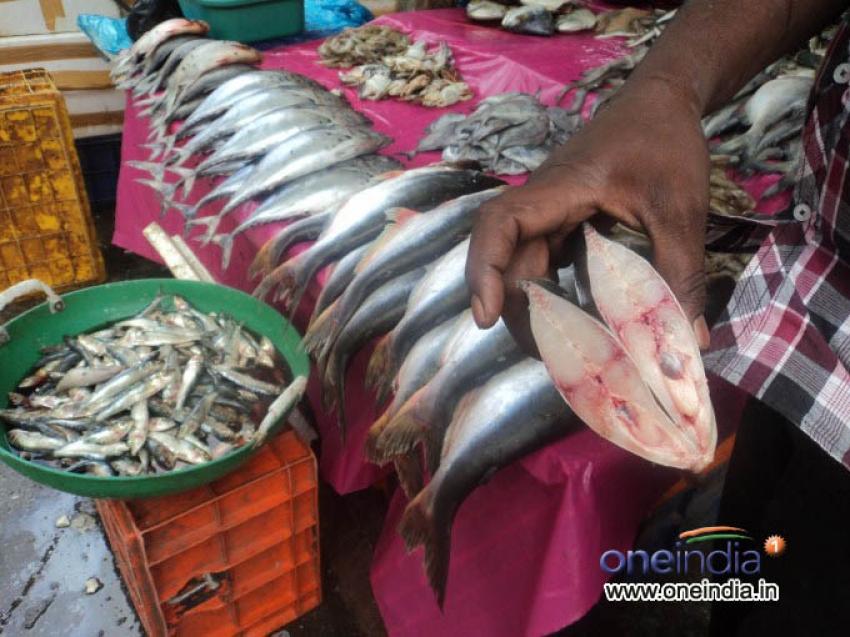 Russell Market - Fish Stalls Photos